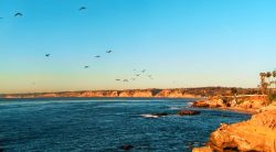 Pelican Flock at La Jolla Cove San Diego 1