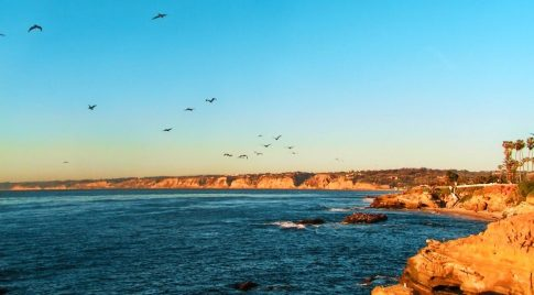Pelican Flock at La Jolla Cove San Diego 1