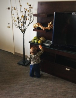 TinyMan Grabbing at decor in Luxury Suite at Westin Seattle 1