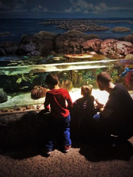 Chris Taylor and Dudes at tropical tank at Denver Downtown Aquarium 4