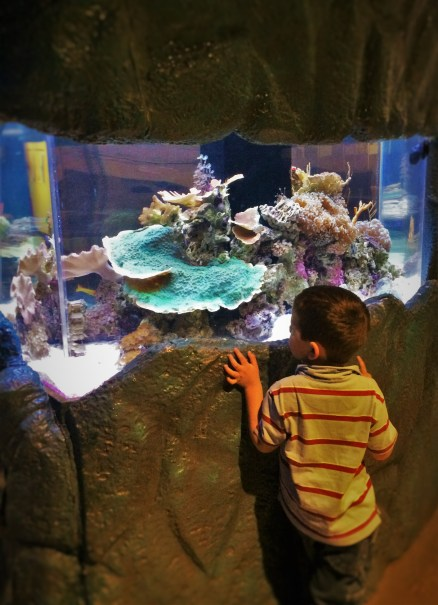 LittleMan and Aquarium at the Butterfly Pavilion Denver Colorado 1