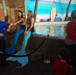 LittleMan and Mermaids at Denver Downtown Aquarium 1