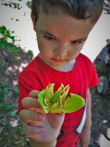 LittleMan and tree blossom at Kennesaw Mountain National Battlefield 1