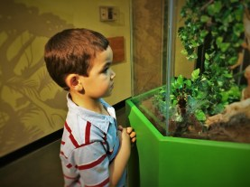 LittleMan looking at a Tarantula at the Butterfly Pavilion Denver Colorado
