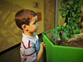 LittleMan looking at a Tarantula at the Butterfly Pavilion Denver Colorado