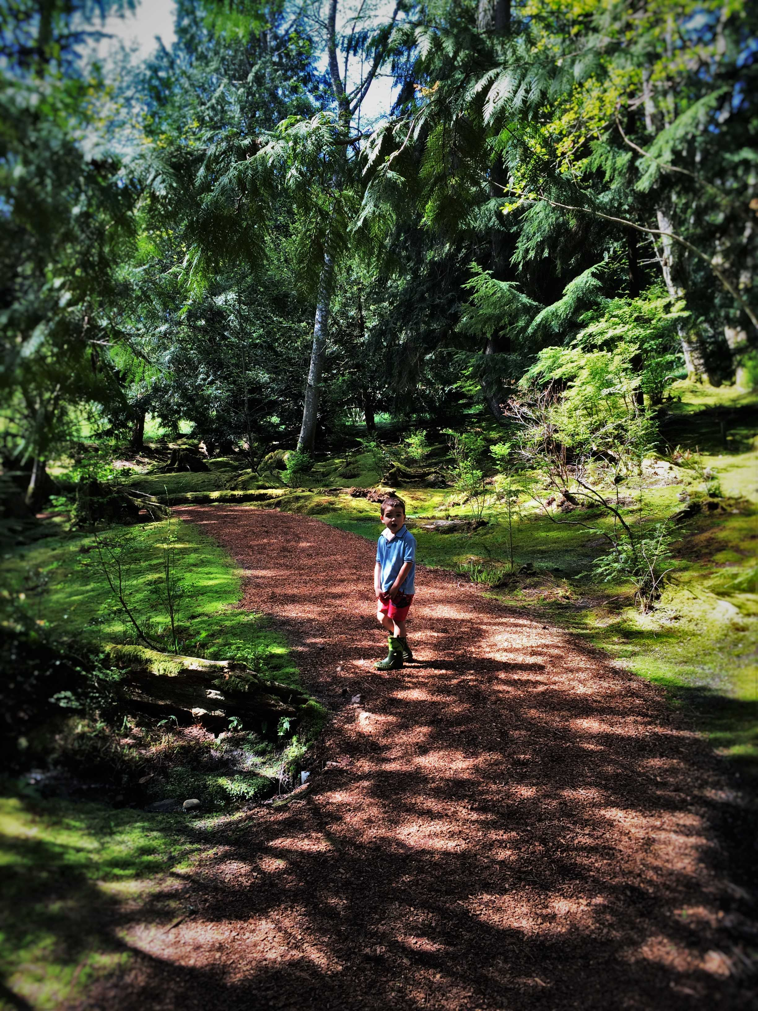LittleMan on Shadowy Path at Bloedel Reserve Bainbridge Island 2