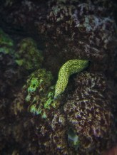 Moray Eel at Denver Downtown Aquarium 1