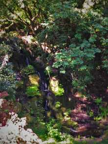 Rhododendron Waterfall at Bloedel Reserve Bainbridge Island 1