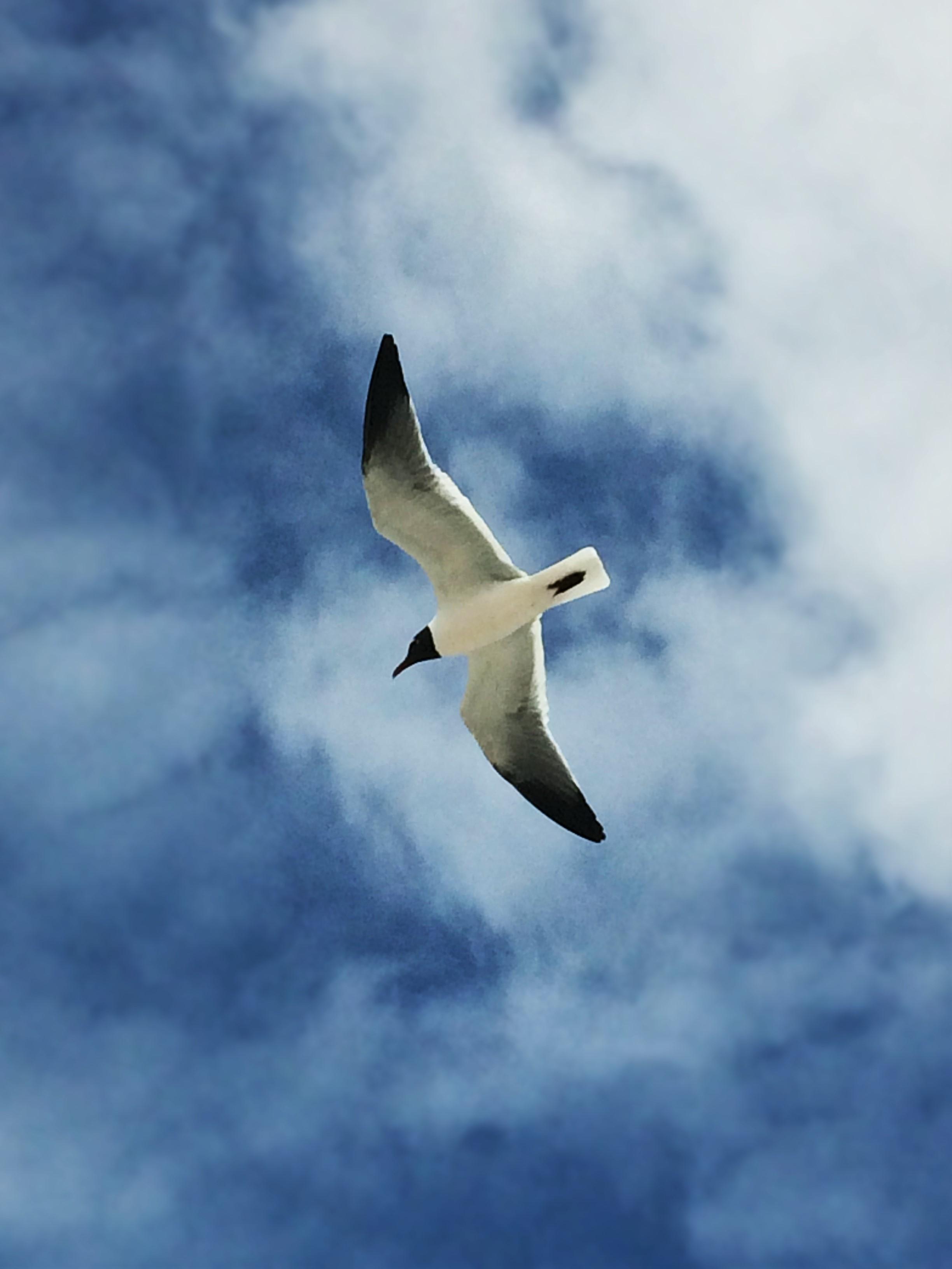Sea Gull at Jacksonville Beach Florida 2