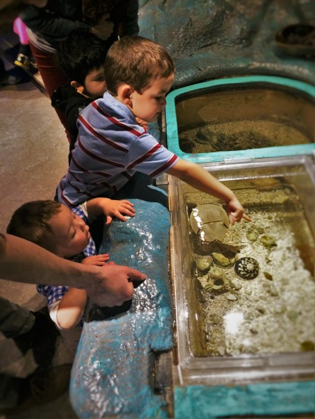 Taylor Kids petting Horseshoe Crab at the Butterfly Pavilion Denver Colorado 1