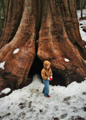 LittleMan and Giant Sequoia in Grant Grove Kings Canyon 2traveldads.com
