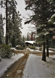 Snowy pathways at Wuksachi Lodge in Sequoia National Park 2traveldads.com