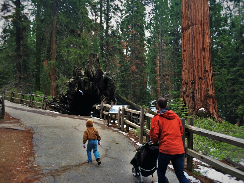 Taylor Family and Fallen Monarch Kings Canyon National Park California 2traveldads.com