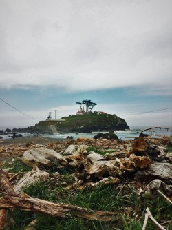 Driftwood at Battery Point Lighthouse Crescent City 2