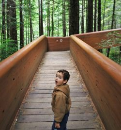 LittleMan Hiking in Ladybird Johnson Grove Redwood National Park