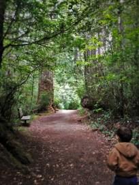 Hiking in Ladybird Johnson Grove Redwood National Park