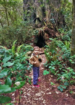 Looking for gnomes in Redwood National Park California 2traveldads.com