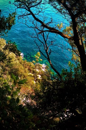 Blooming Agave on hiking trail Cinque Terre Italy 1e