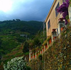 Hillside vineyard in Manarola Cinque Terre Italy 1e