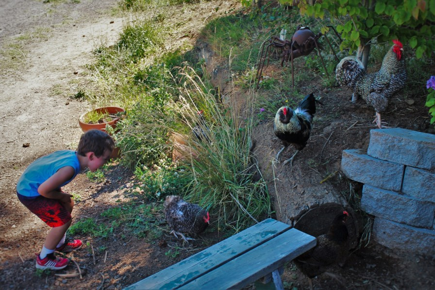 LittleMan and Chickens at AniChe Cellars Underwood Columbia River Gorge 2