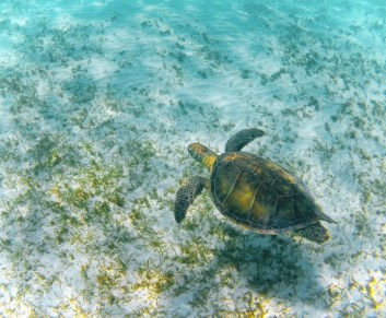 Swimming with Sea Turtles in Akumal 1