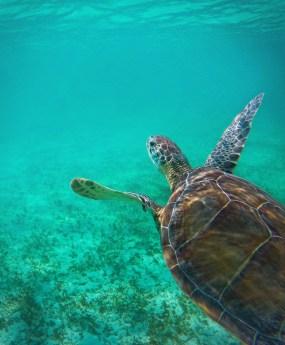 Swimming with Sea Turtles in Akumal 5