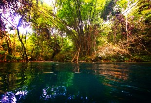 Jungle Plants while Floating the White River Ocho Rios Jamaica 4