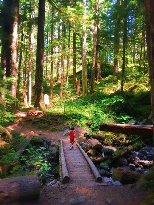 LittleMan on trail at Silver Falls Mt Rainier National Park 2