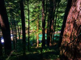 Ohanapecosh River from trail to Silver Falls Mt Rainier National Park 1
