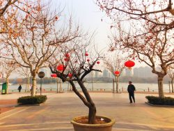 chinese-lanterns-in-shanghai-1