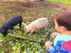 taylor-kids-with-pigs-at-pumpkin-patch-fall-traditions-1