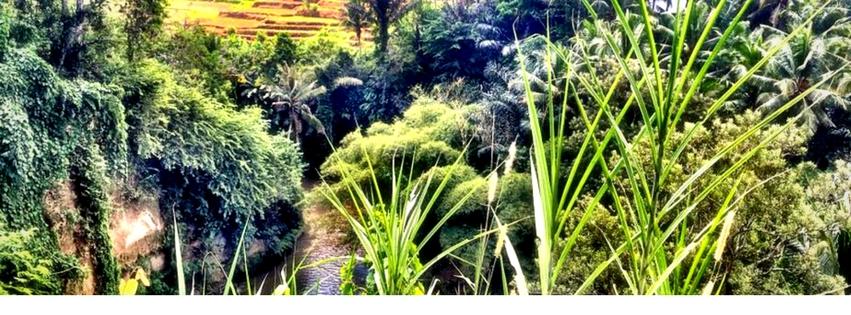 ubud-bali-rice-terrace-farm