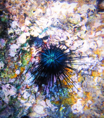 Colorful Urchins and Fish in Cabo Pulmo National Park 2
