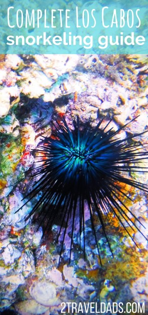 Snorkeling in Cabo San Lucas and the surrounding areas is incredible with diverse wildlife and snorkeling experiences. Perfect for family travel and fun. 2traveldads.com