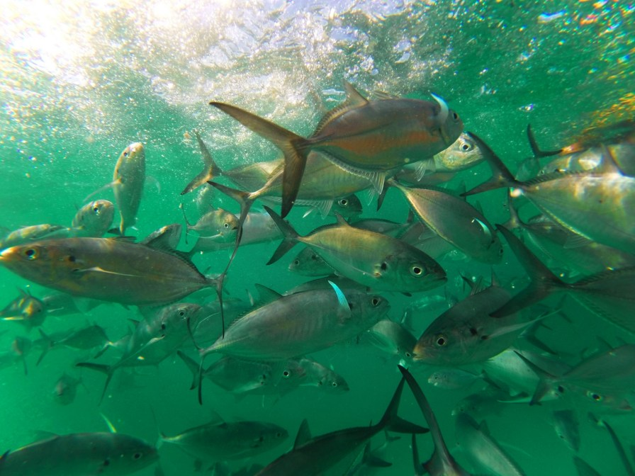 School of fish while snorkeling in Chileno Bay Cabo San Lucas 2