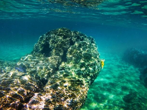 Yellow pufferfish and urchins while snorkeling at Santa Maria Bay Cabo
