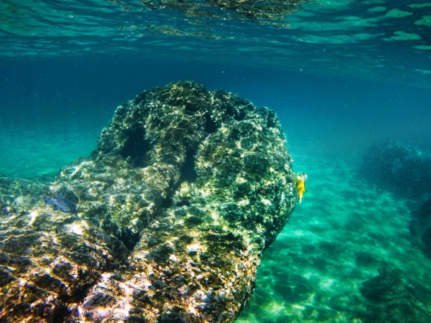 Complete guide to snorkeling cabo san lucas and the los for San jose fishing spots