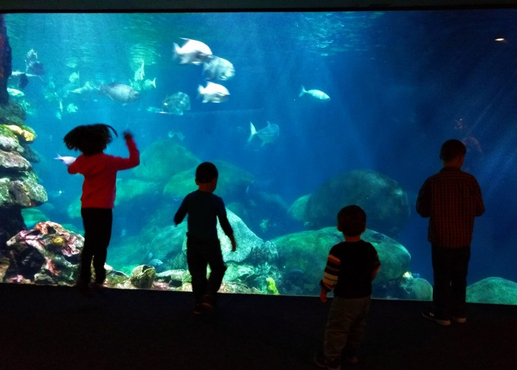 Taylor Kids at Ocean Journey Tennessee Aquarium 1