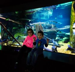 Taylor Kids at Rivers of the World exhibit Tennessee Aquarium 2