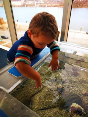 Taylor Kids at Touch Tank Tennessee Aquarium 2