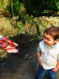 Taylor kids touching king snake at Tennessee Aquarium 1