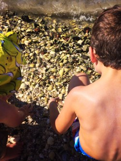 Taylor Kids finding Shells on Beach in La Paz BCS Mexico 1