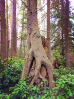 Forest at Dungeness Spit National Wildlife Refuge Sequim 2