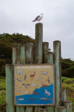 17 Mile Drive Sign Passports and Plates 1