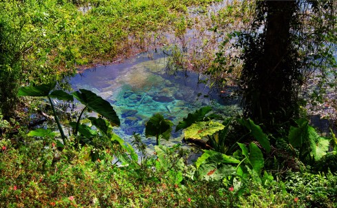Crystal Clear water at Rainbow Springs State Park 1