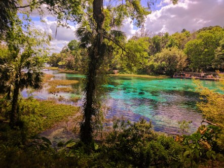 Crystal Clear water at Rainbow Springs State Park 4