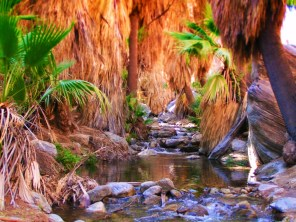 Flowing stream at Agua Caliente Palm Springs Indian Canyons 1