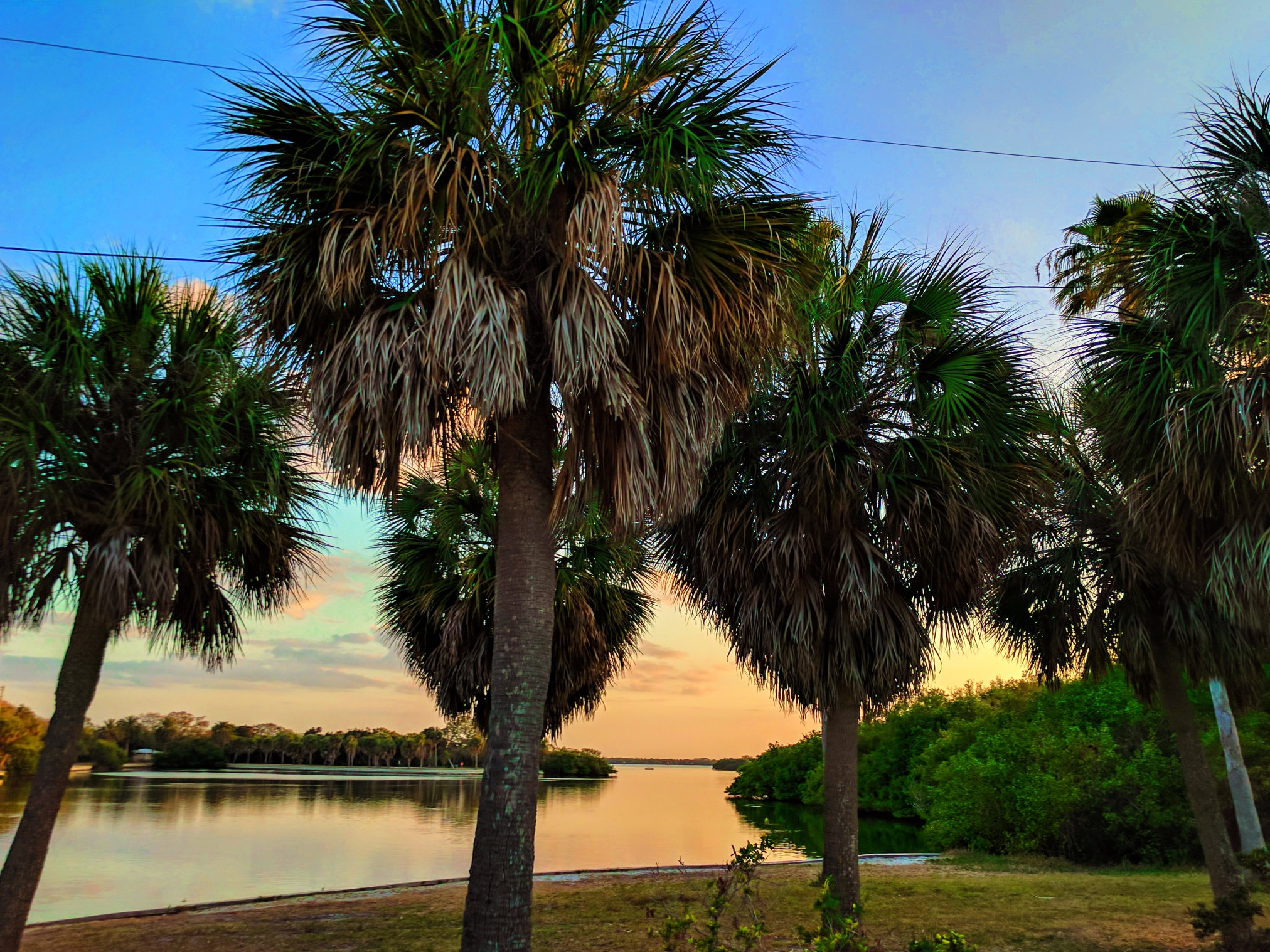 Palm Trees at Sunset Fort De Soto Park Campgroung Pinellas County Florida 1
