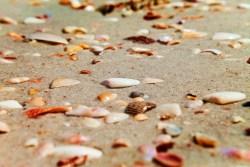 Shells at Ponte Vedra Beach St Augustine Florida 2