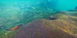 Snorkeling in Crystal River Florida Keyhole 1